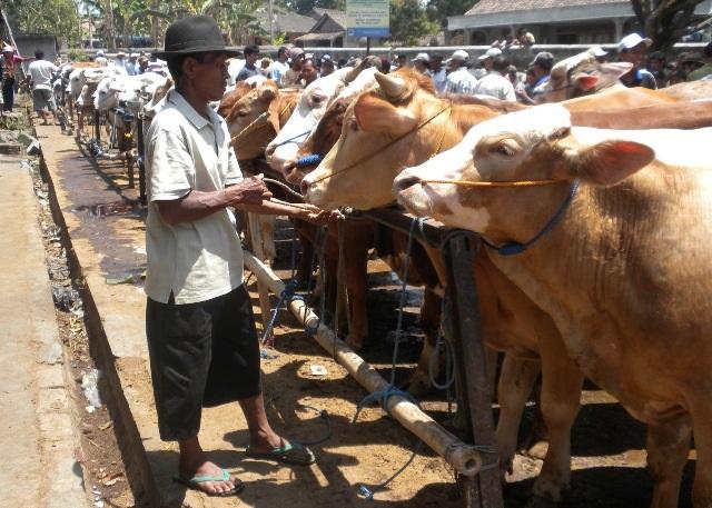 Hewan Kurban yang Datang ke Kota Yogyakarta Wajib di Sterilkan