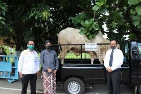 5 Ekor Hewan Kurban Disalurkan Melalui Pemerintah Kota Yogyakarta