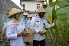 Launching Relawan Hijau dan Panen Jagung Manis Kelurahan Tahunan