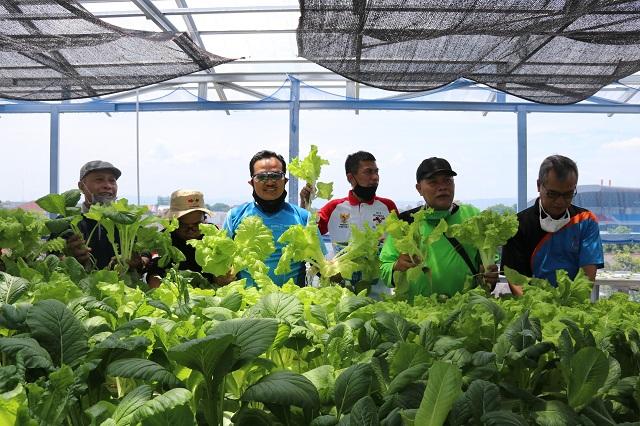 Manfaatkan Rooftop untuk Kebun Sayur