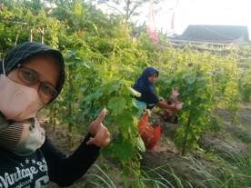 KTD Pelangi Mendungan Manfaatkan Lahan Tidur jadi Kebun Sayur
