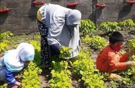 Perkuat Ketahanan Pangan Lewat Kampung Sayur