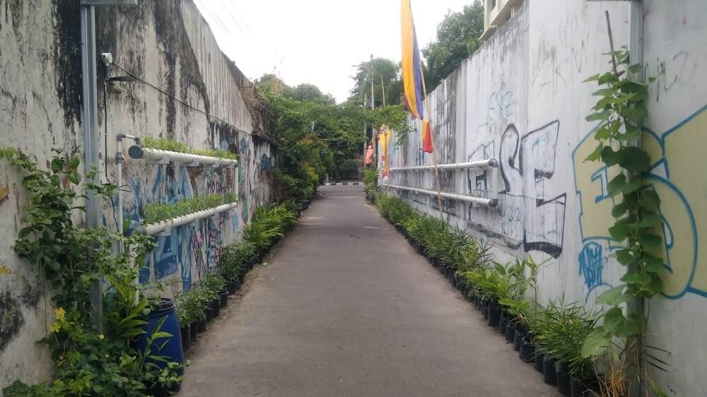 Transformasi Perkampungan di Kota Yogyakarta Jadi Lorong Sayur nan Indah